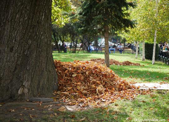 Осень в Софии