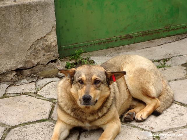 Бездомные собаки в Болгарии