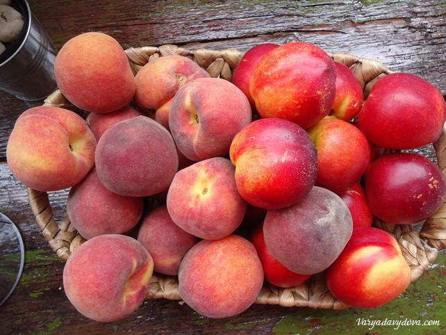 Болгарские фрукты летом