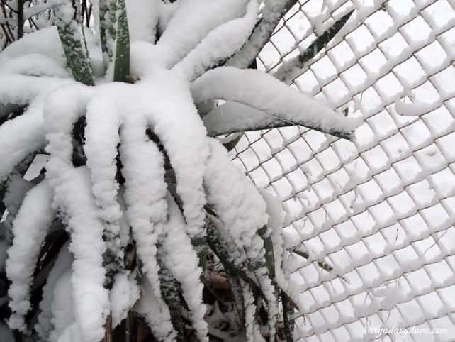 Снег в Болгарии