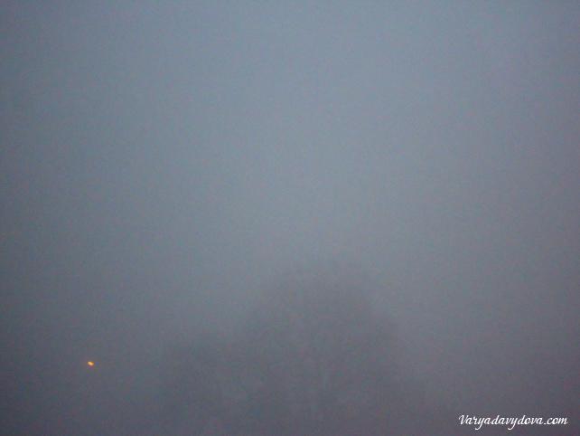 sofia-tuman-yanvar