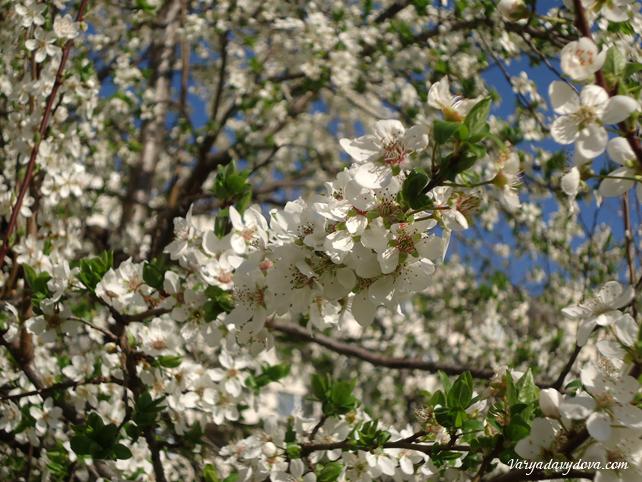 весна в Софии